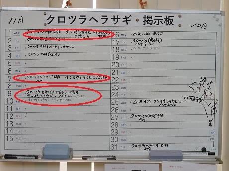 10月11月のナンヨウショウ情報.jpg